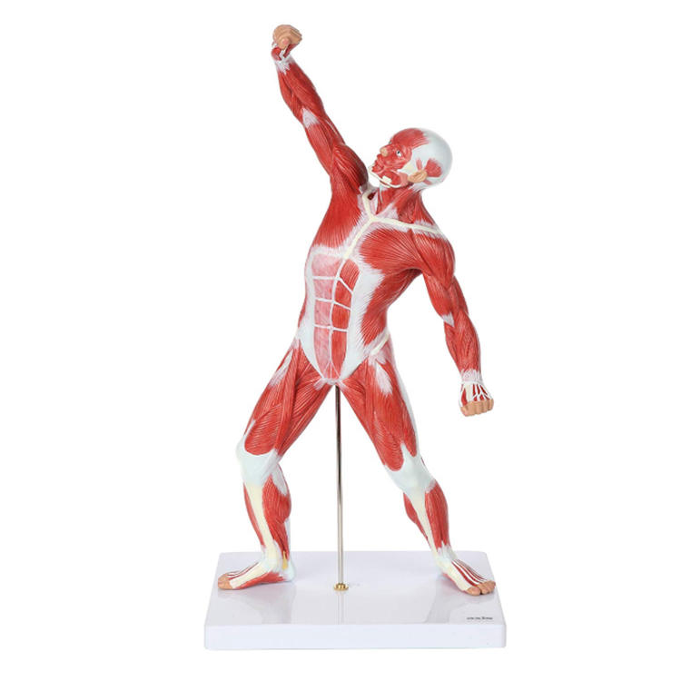 Miniature small human body figure resin product statue